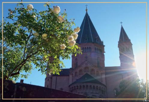Rosenstock auf dem Liebfrauenplatz vor dem Dom zu Mainz