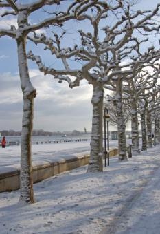 Winterliche Rheinpromenade
